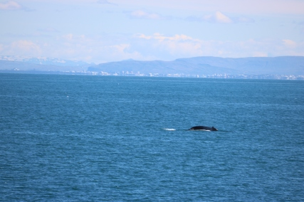 whale at Keflavik